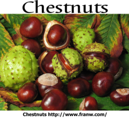 Chestnuts FW