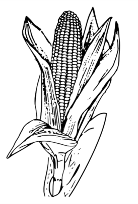 Corn to color 1